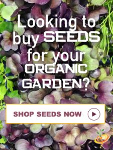 Organic Gardening Seeds