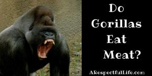 do gorillas eat meat