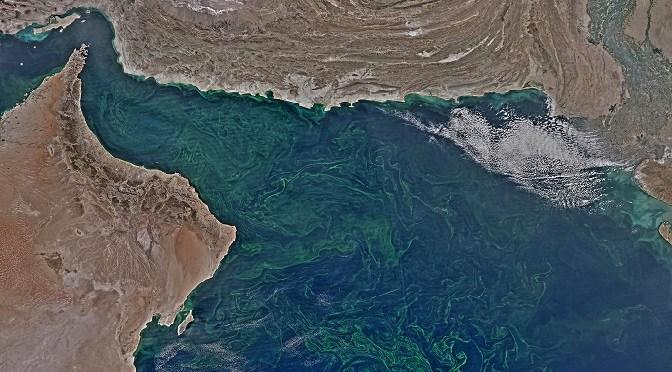 Oman Algae