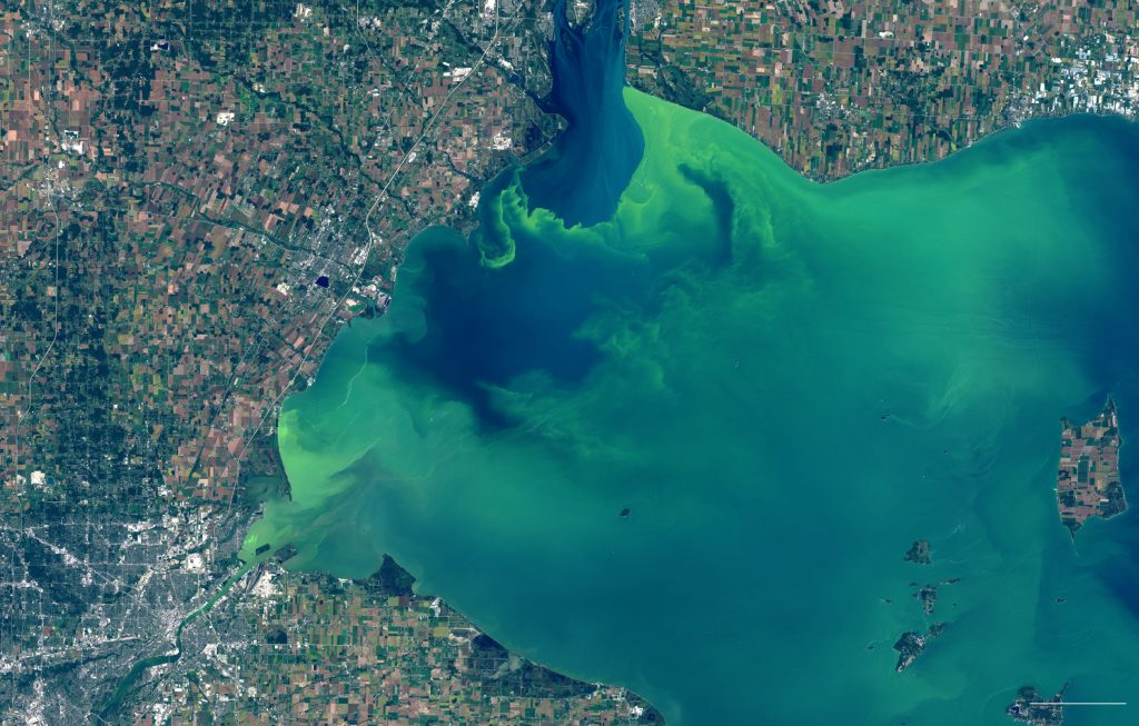 lake erie algae bloom per nyt