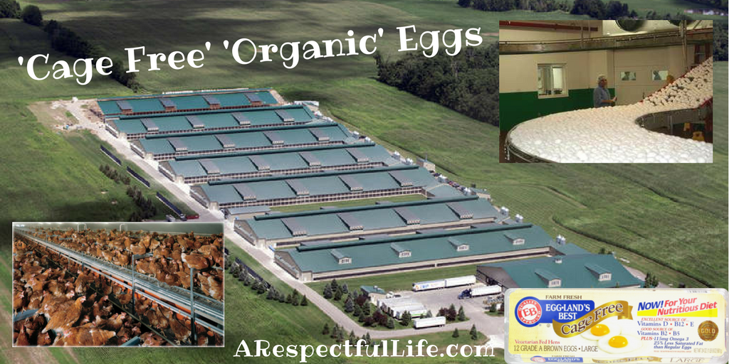 cage free organic eggs