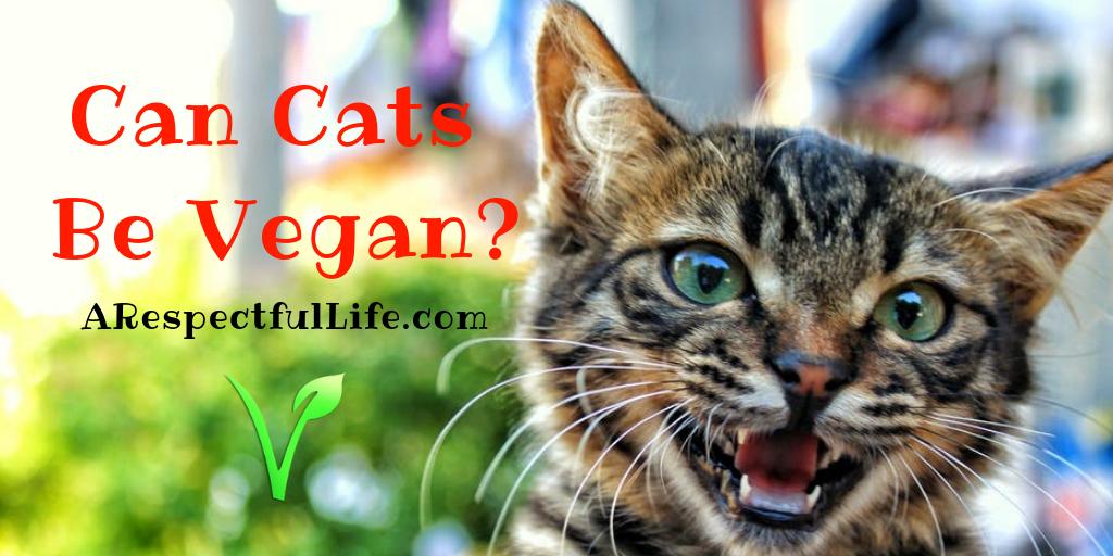 Can Domestic Cats Be Vegan? - Respectful Living